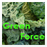 green_force_klein